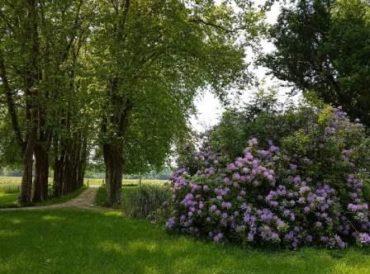 Parc du château Loupiac-Gaudiet